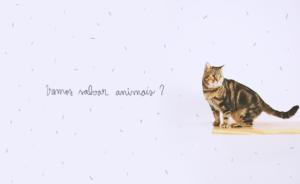 O Nicolau é FIV+ e é um gatão perfeitamente saudável